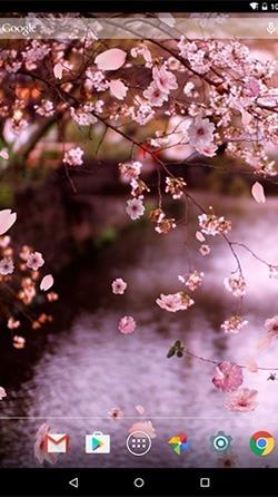 Sakura Android Wallpaper Image 2