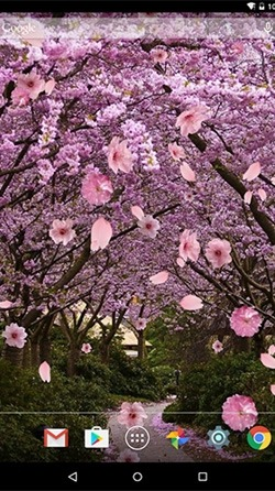 Sakura Android Wallpaper Image 3