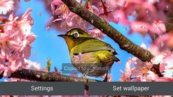Sakura Garden Android Wallpaper Image 3