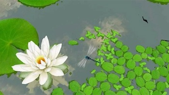 Lotus 3D Android Wallpaper Image 1