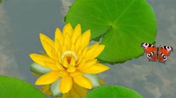 Lotus 3D Android Wallpaper Image 3