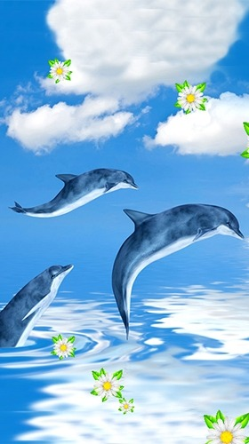 Dolphins Android Wallpaper Image 2