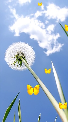 Dandelion Android Wallpaper Image 3