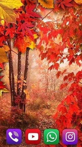 Autumn Rain Android Wallpaper Image 2