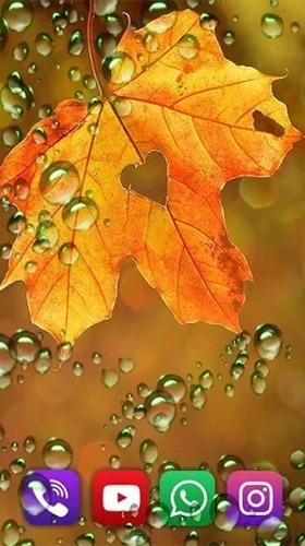 Autumn Rain Android Wallpaper Image 3