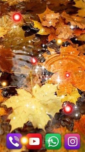 Autumn Rain Android Wallpaper Image 4