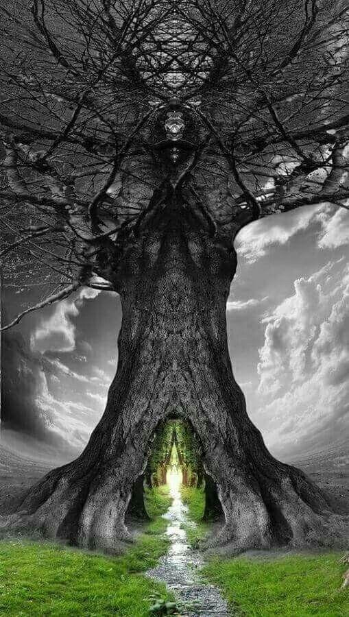 Tree Mobile Phone Wallpaper Image 1
