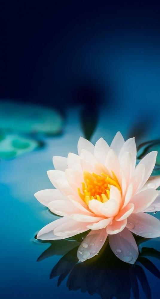 Flower Mobile Phone Wallpaper Image 1