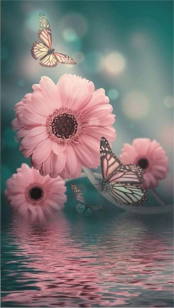 Flowers Mobile Phone Wallpaper Image 1