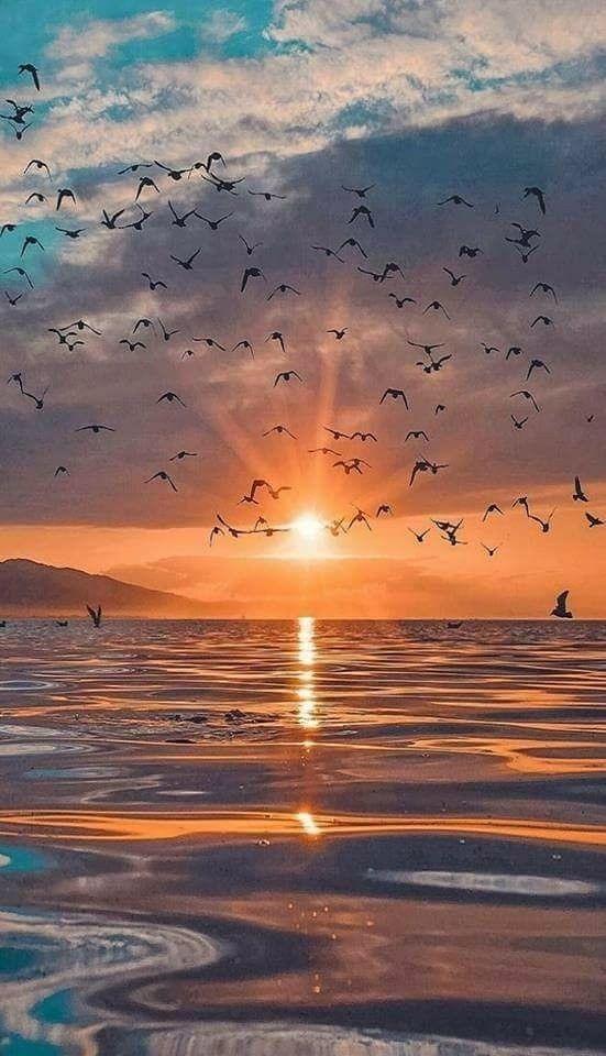 Sunset Mobile Phone Wallpaper Image 1
