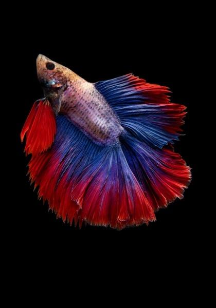 Fish Mobile Phone Wallpaper Image 1
