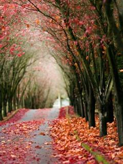 Heaven Walk