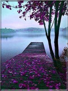 Purple Autumn  Mobile Phone Wallpaper
