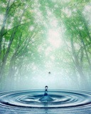 Water Drop  Mobile Phone Wallpaper
