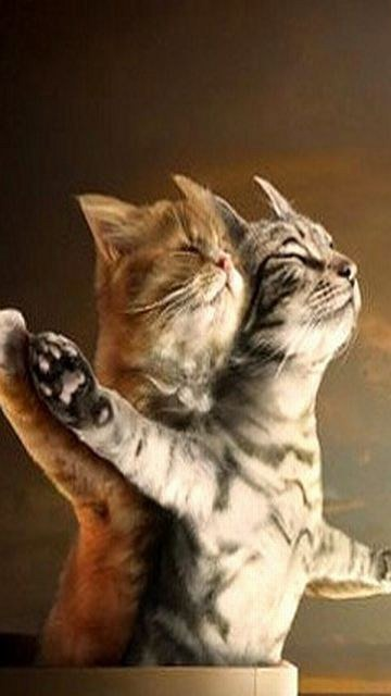 Download Free Mobile Phone Wallpaper Cats Titanic 1218