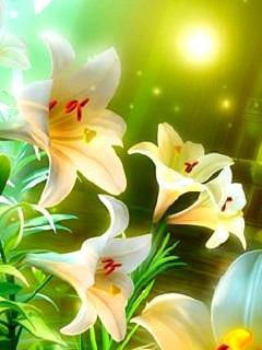 White Lilies  Mobile Phone Wallpaper