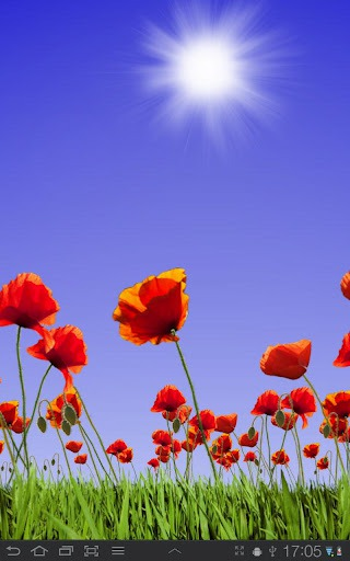 Download Free Android Wallpaper Poppy Field 2044