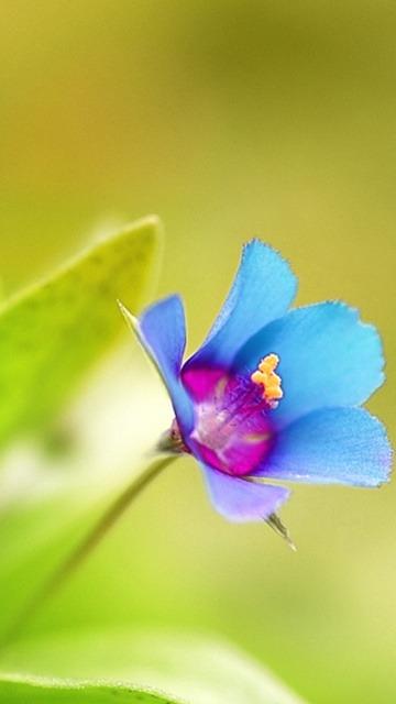Download Free Mobile Phone Wallpaper Beautiful Flower 2076