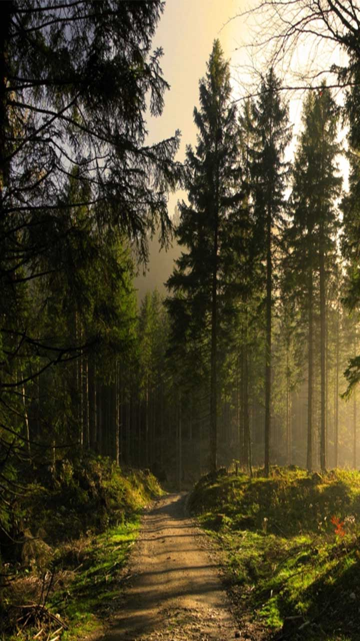 Download Free Mobile Phone Wallpaper Forest 2754