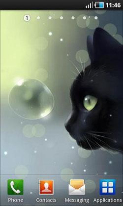 Curious Cat QMobile NOIR A10 Wallpaper