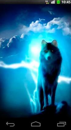 Night Wolves QMobile NOIR A10 Wallpaper