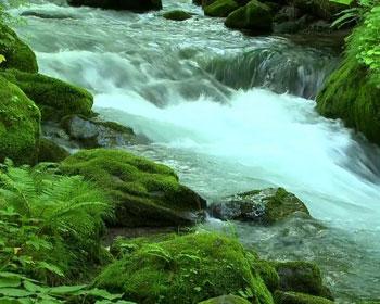 River Flow QMobile NOIR A10 Wallpaper