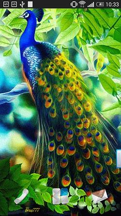 Download Free Android Wallpaper Peacock 3034 Mobilesmspk Net