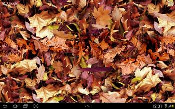 Autumn Leaves 3D QMobile NOIR A10 Wallpaper