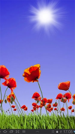 Poppy Field Android Mobile Phone Wallpaper