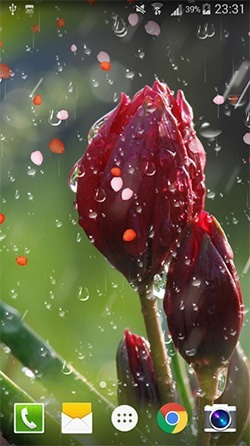 Rose: Raindrop Android Mobile Phone Wallpaper