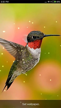 Download Free Android Wallpaper Birds Sounds And Ringtones