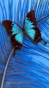 Butterfly Android Mobile Phone Wallpaper