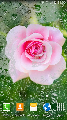 Roses Android Mobile Phone Wallpaper