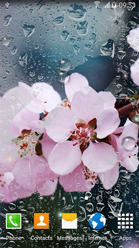 Rainy Flowers Android Mobile Phone Wallpaper