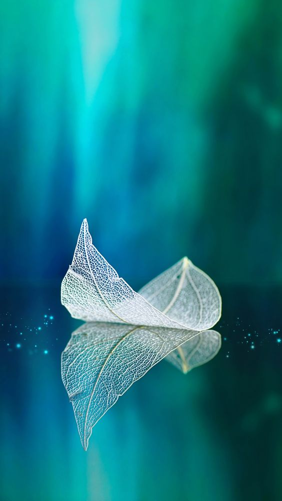 Leaf Android Mobile Phone Wallpaper