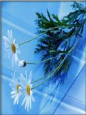Flowers  Mobile Phone Wallpaper