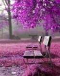 Purple Nature Nokia 106 (2018) Wallpaper