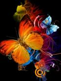 Butterflies  Mobile Phone Wallpaper
