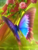 Butterfly  Mobile Phone Wallpaper
