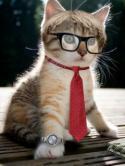 Intellectual Cat  Mobile Phone Wallpaper