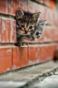 Curious Kittens  Mobile Phone Wallpaper