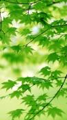 Leaves  Mobile Phone Wallpaper