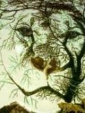 Lion Tree  Mobile Phone Wallpaper