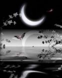 Beautiful Night  Mobile Phone Wallpaper
