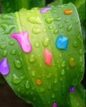 Rain Color  Mobile Phone Wallpaper