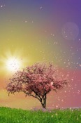 Spring Trees Android Mobile Phone Wallpaper