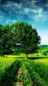 Tree  Mobile Phone Wallpaper