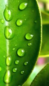 Dew Nokia 700 Wallpaper
