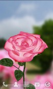 3D Rose Wallpaper for Mobile Phone