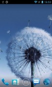 Galaxy S3 Dandelion Water Android Mobile Phone Wallpaper
